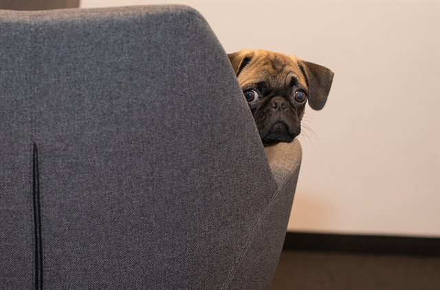 Pug is sorry your page is not available